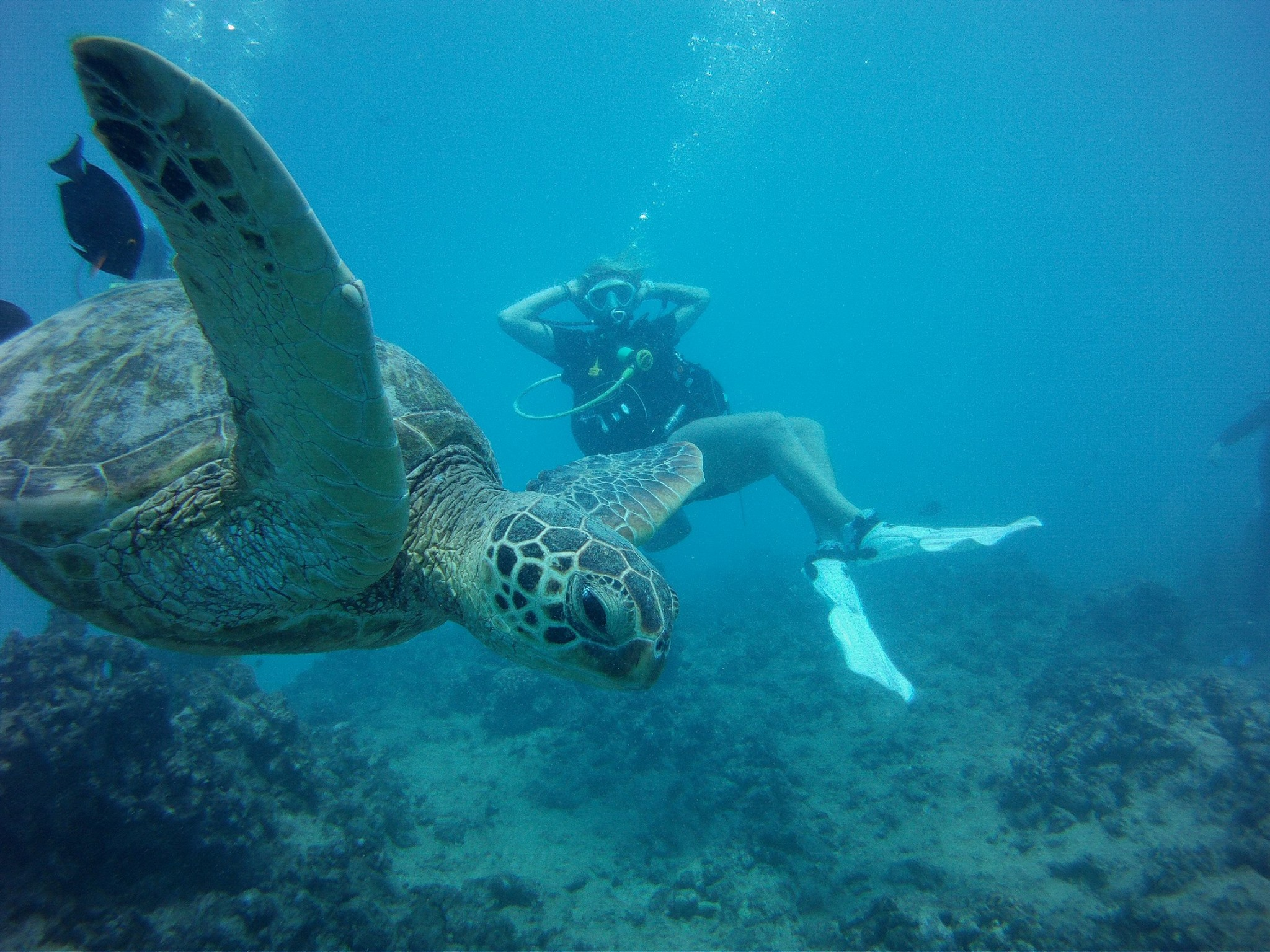 Turtle with reclyner