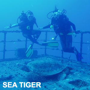 Sea Tiger Shipwreck Dive