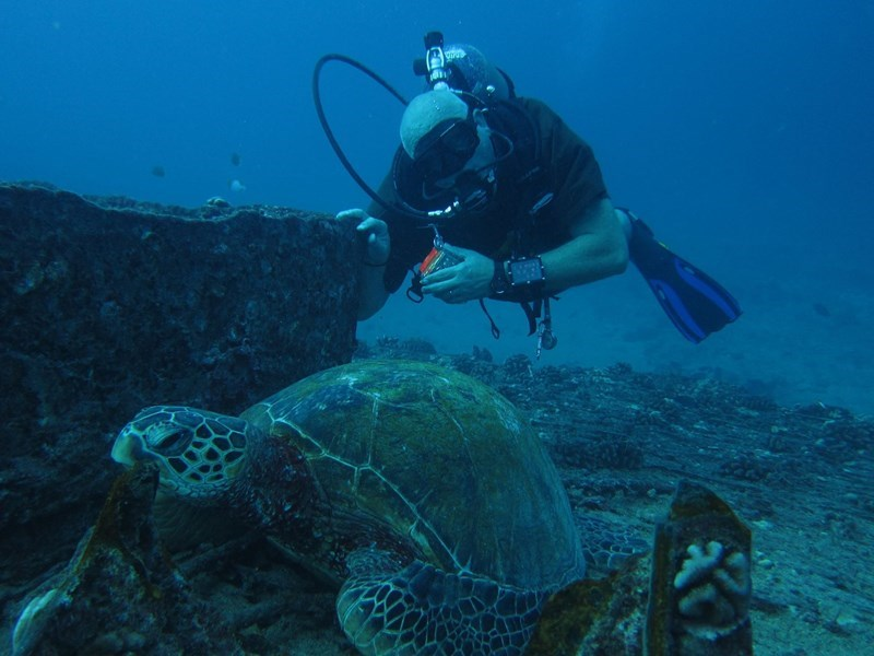 Turtle on wreck